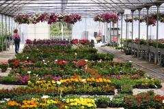 vendita-piante01