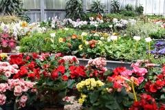 vendita-piante10