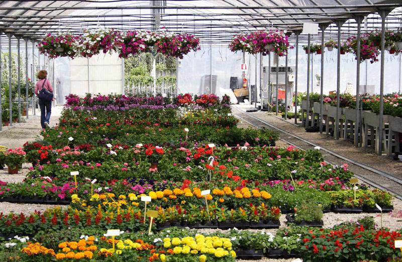 Piante a perugia vendita floro vivaismo for Vendita piante ornamentali
