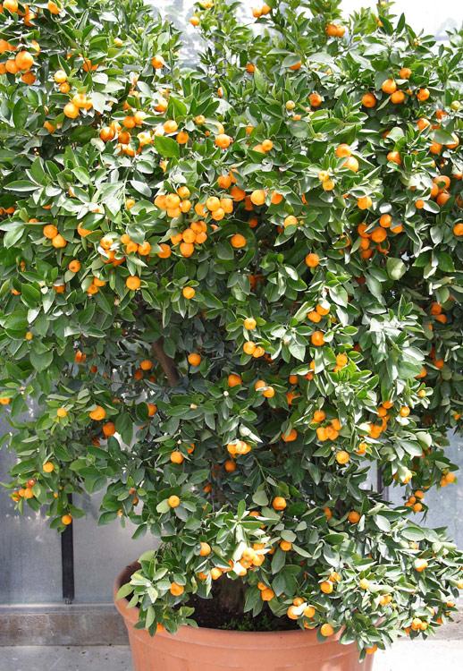 Piante a perugia vendita floro vivaismo for Piante vendita
