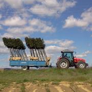 Come coltiviamo gli alberi ?