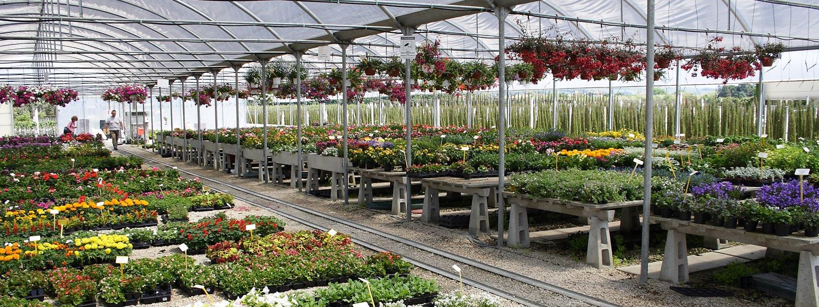 plant-center_piante-ok-2